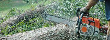 Pozwolenie na wycinkę drzew