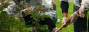Jesienne sprzątanie ogrodu