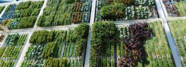 Ogród wertykalny we wnętrzu – jak założyć?