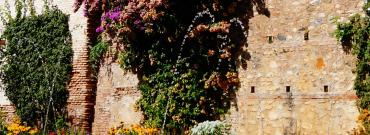Aranżacja zieleni przed ogrodzeniem