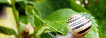 Ślimaki – jak pozbyć się ich z ogrodu?