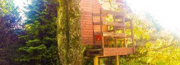 Domek na drzewie – dziecięce marzenie czy realny plan?