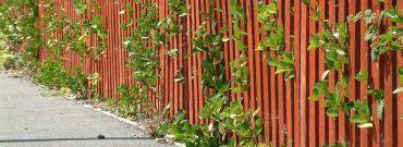 Czym ogrodzić działkę i ile to kosztuje?