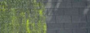 Usuwanie nalotów biologicznych z dachu