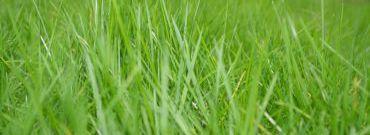 Piękny trawnik od A do Z