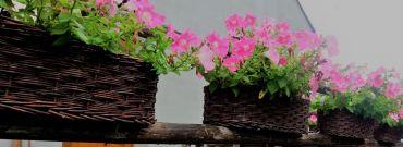Balkon piękny dzięki roślinom. Sprawdź co posadzić