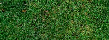 Jak przeprowadzać mulczowanie trawnika i dlaczego warto to robić?