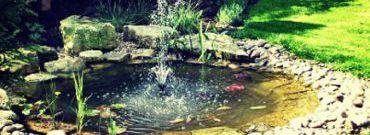 Oczko wodne w ogrodzie – jak je założyć?