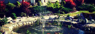 Oczko wodne: rośliny, ryby i akcesoria oczka wodnego (fontanny, filtry)