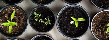 Ogród warzywny dla zielonych - przegląd roślin i garść porad na start
