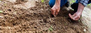 Jak zrobić piękny ogród na terenie po budowie?