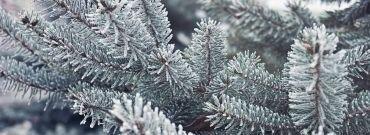 Jak przygotować ogród przed zimą?