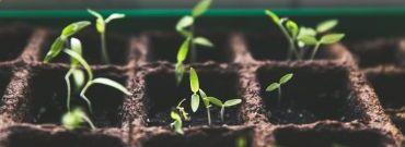 Ogród zimowy - jak urządzić oranżerię?