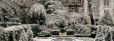 Osłona roślin na zimę
