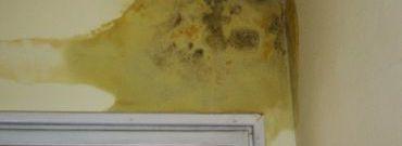 Jak zwalczyć pleśnie i grzyby w mieszkaniu?