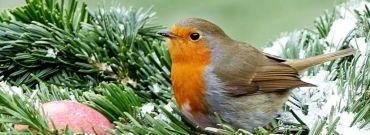 Zimowe prace w ogrodzie - zobacz o czym pamiętać w czasie chłodnych miesięcy