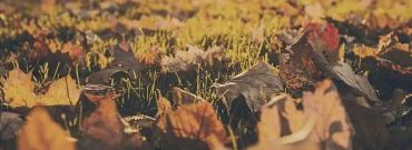 Czy spalanie suchych liści we własnym ogródku jest legalne i opłacalne?