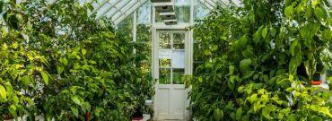 Szklarnia ogrodowa – zainwestuj w zdrowie