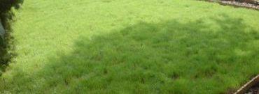 Trawnik po zimie