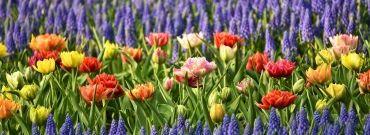 Ogród w kwietniu. Czego potrzebujesz? Co należy zrobić?