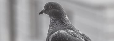 Zabezpieczenie balkonu przed ptakami – siatki