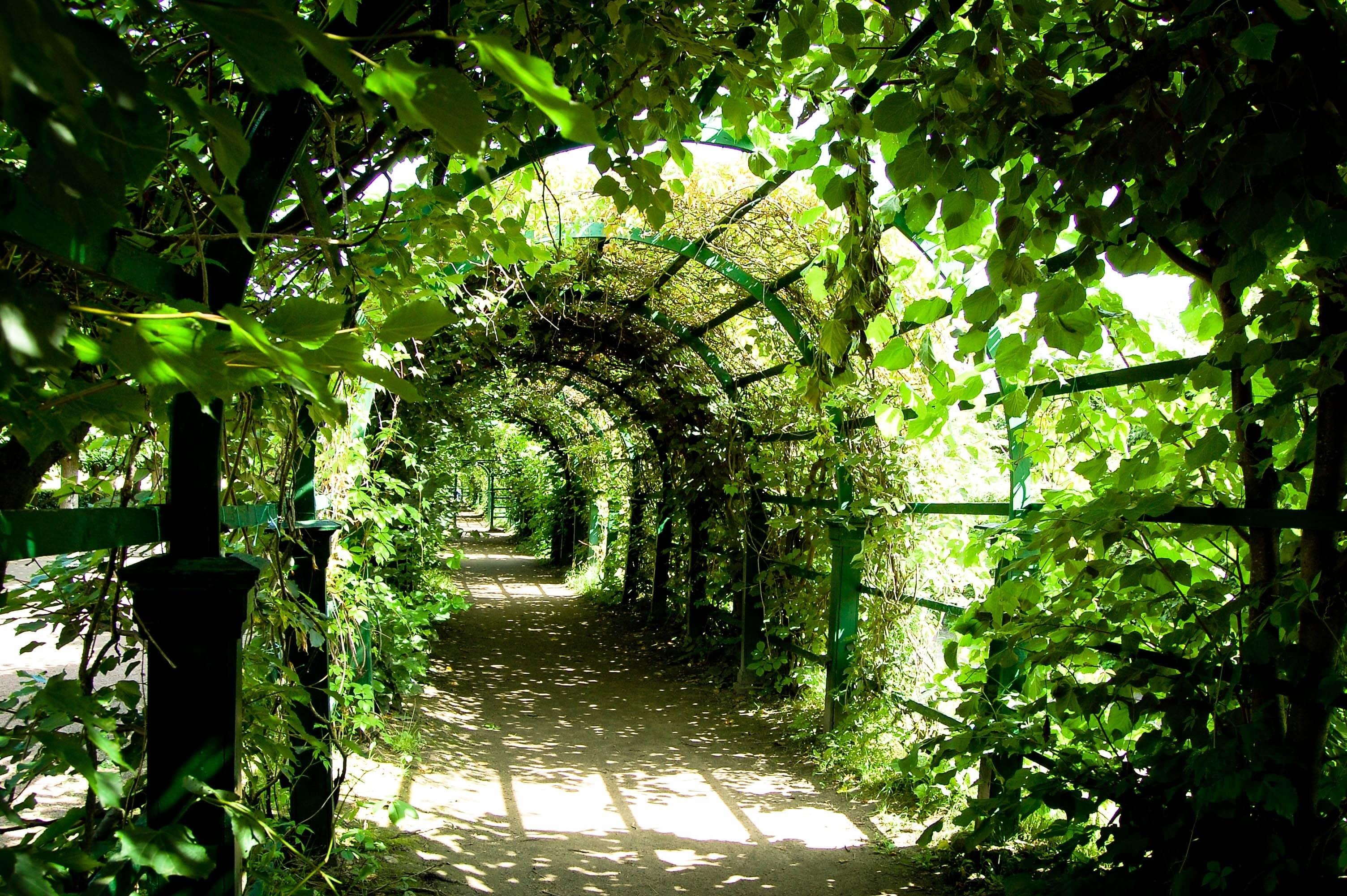 Pergola tunel