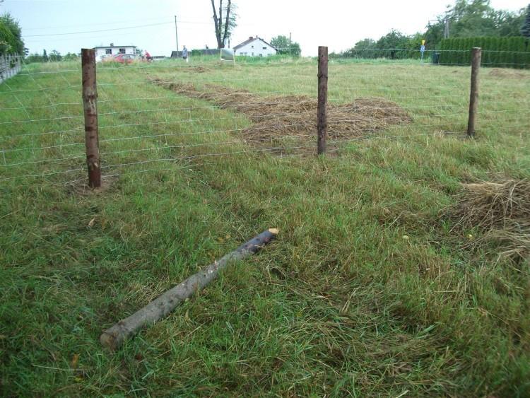 Budowa ogrodzenia - 2