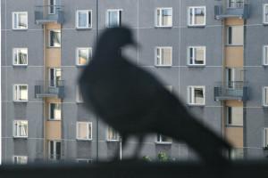 ptaki (2)