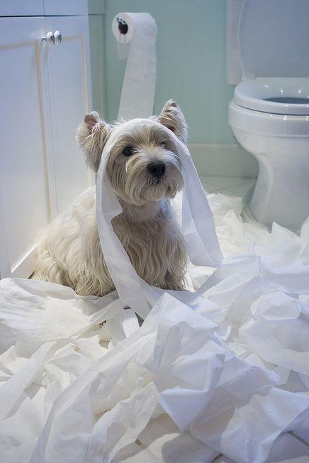 łazienka pies