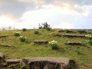 grass-bank-with-daffodils-1375865-1280x960