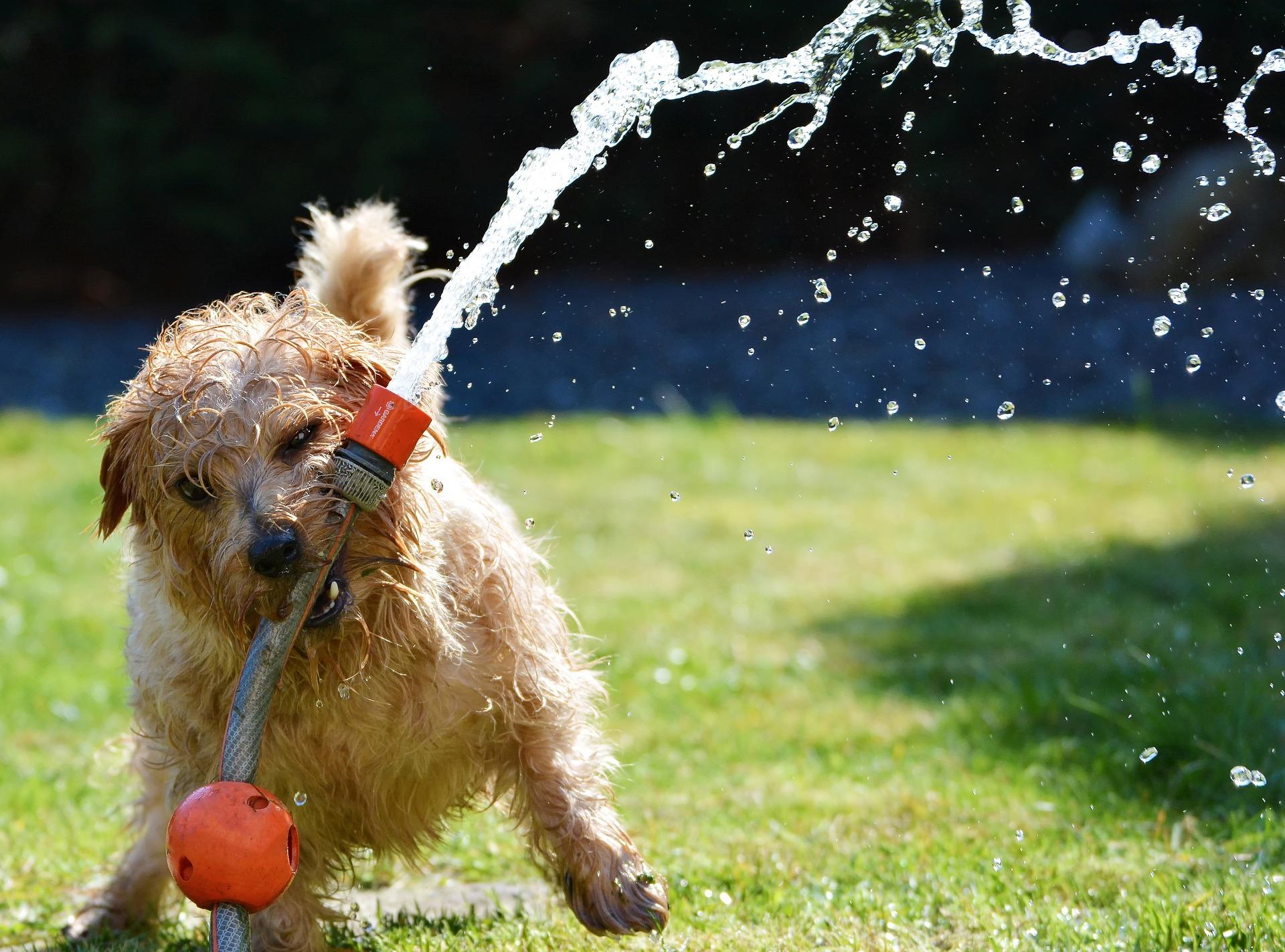 Pies przy basenie